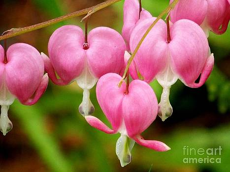 Hanging Hearts In Pink And White by Eunice Miller