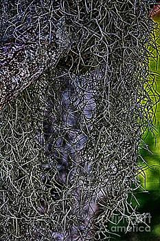 Charles Davis - Hanging Moss