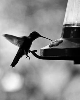 Hanging On by Carl Christensen