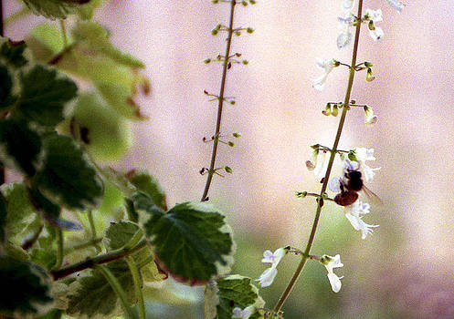 Hanging Pot With Bee by Jack Thomas