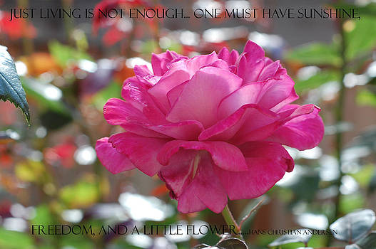 Hans Christian Andersen Quote-Flowers by Willie Chea