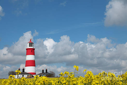 Happisburgh Lighthouse with Oil Seed rape In Flower by Paul Lilley