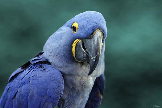 Happy Bird by David Simons
