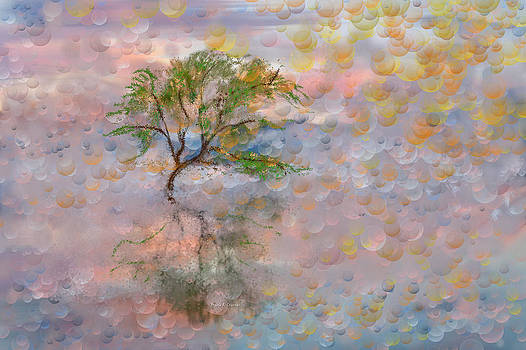 Happy Birthday Good Old Tree by Angela A Stanton