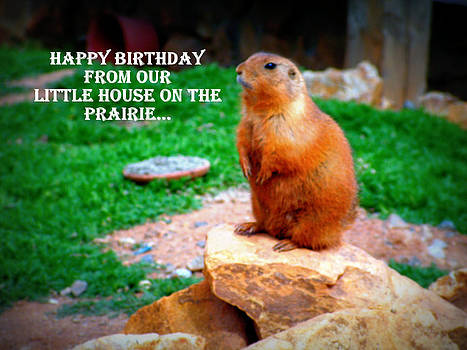 Happy Birthday Prairie Dog by Amber Joy Eifler