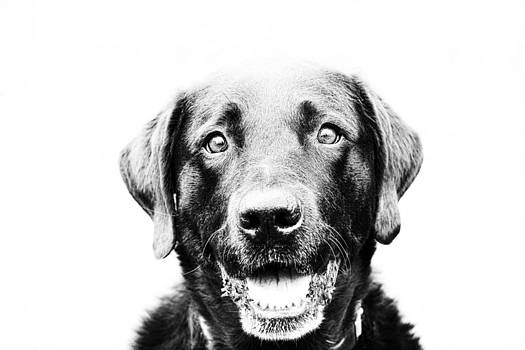 Happy Dog by Chaya Emily Baumbach
