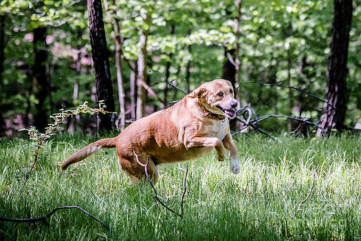 Happy Dog by Jim DeLillo