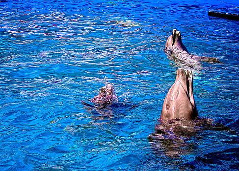 Sandra Pena de Ortiz - Happy Dolphins