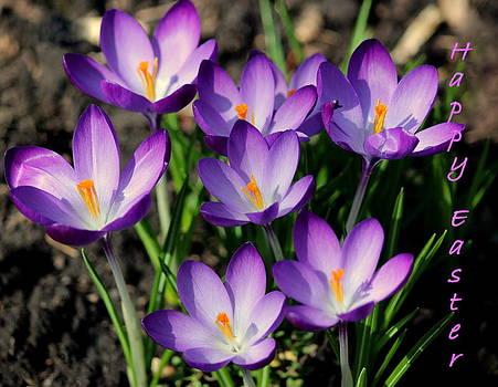 Rosanne Jordan - Happy Easter Crocus
