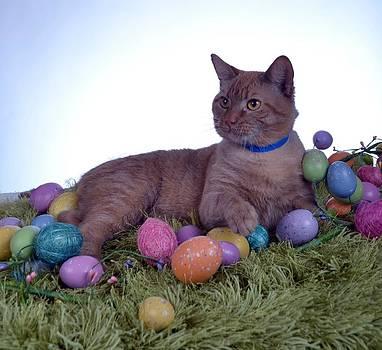 Happy Easter by Michael Sokalski