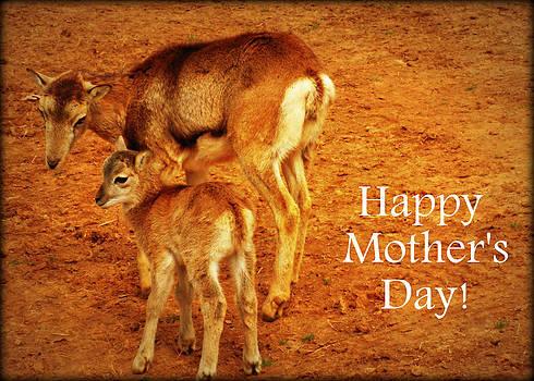 Happy Mothers Day by Amber Joy Eifler
