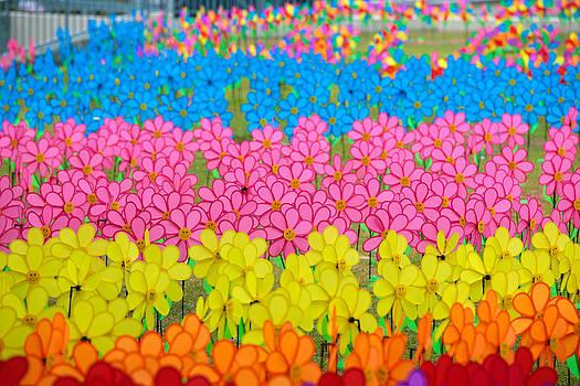 Happy Pinwheels by Calvin Chan