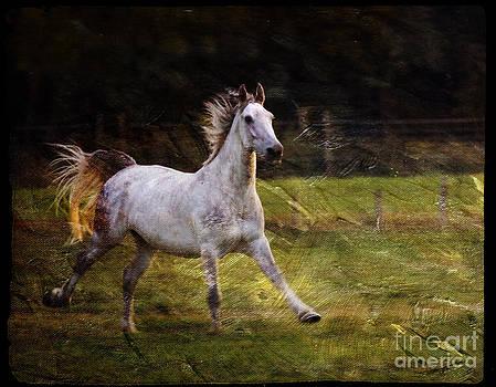 Angel Ciesniarska - happy run
