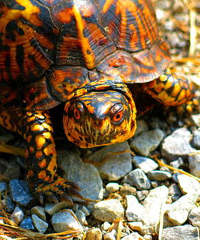 Happy Turtle by Stephen Sherouse
