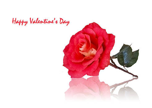 Happy Valentine's Day by Mariola Szeliga