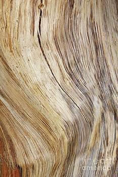 Hermanus A Alberts - Hardwood Texture
