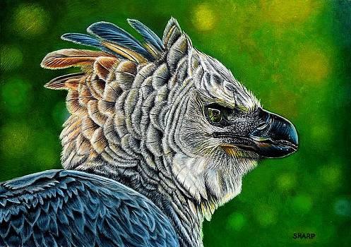 Harpy Eagle by Karen Sharp