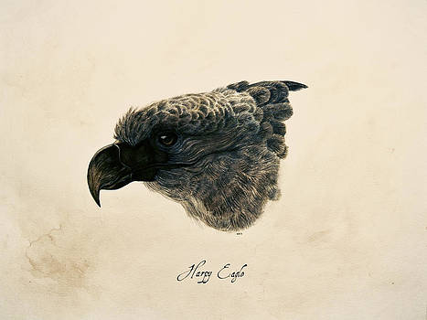 Harpy Eagle by Rachel Root