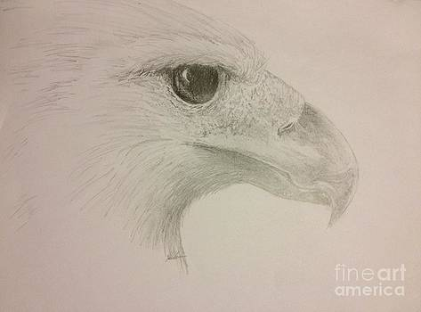 Harpy Eagle Study by K Simmons Luna