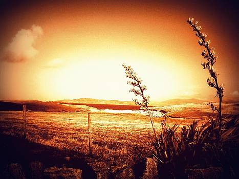 Harris in Sepia by The Creative Minds Art and Photography