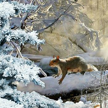Harry in Winter by Morag Bates