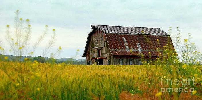 Hartsburg River Bottom Barn by Christy Phillips