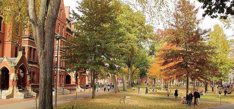 Harvard Yard in Autumn by Ellen Ryan