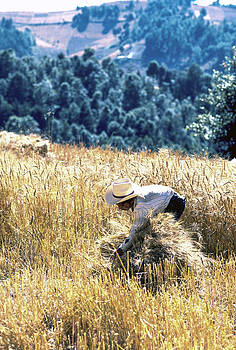 Harvest 10 by Tina Manley