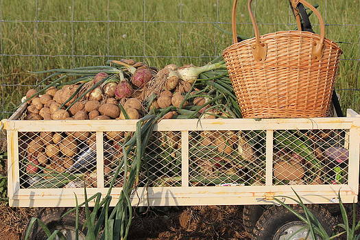Harvest by Charlotte Craig