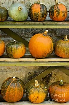 Anne Gilbert - Harvest Display