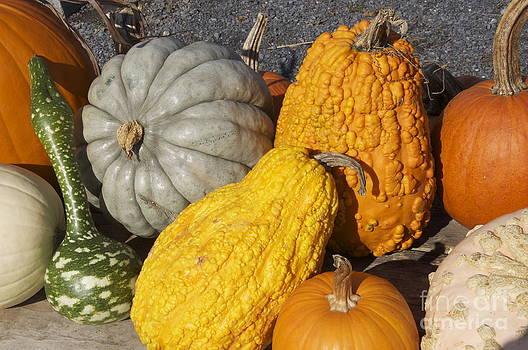 Harvest by Mark Messenger
