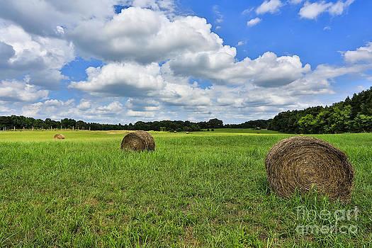 Harvest by Mina Isaac
