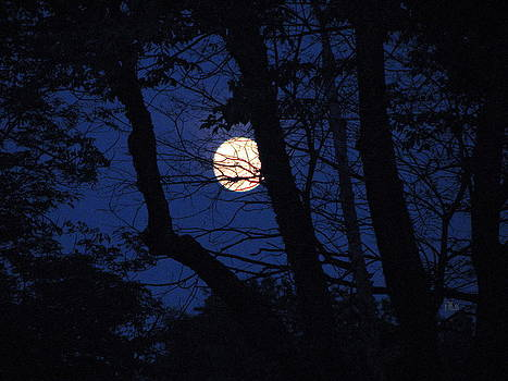 Harvest Moon by June Lambertson