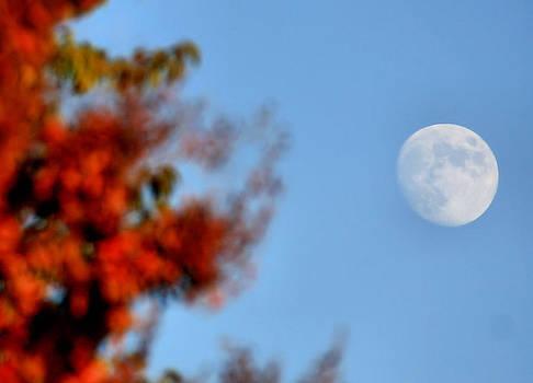 Karen M Scovill - Harvest Moon