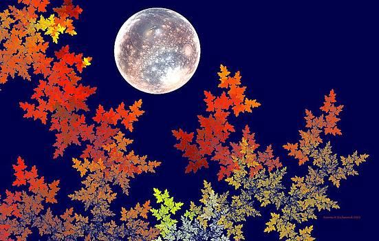 Harvest Moon by Naomi Richmond