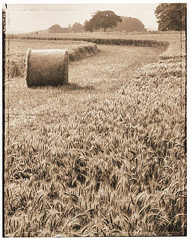 Harvest time by Adrian Brockwell