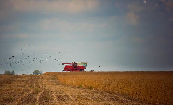 Harvest Time by Virginia Folkman