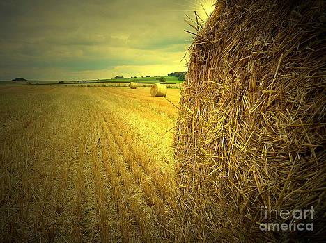 Harvest by Vera  Laake