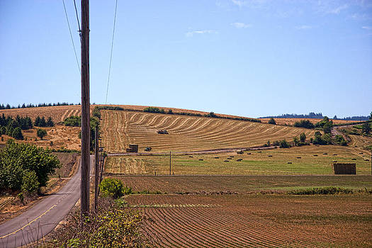 Harvesting Lines IMG 0856 by Torrey E Smith