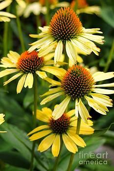 Harvest Moon Conehead Flower by Spirit Baker