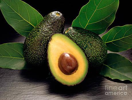 Craig Lovell - Hass Avocado