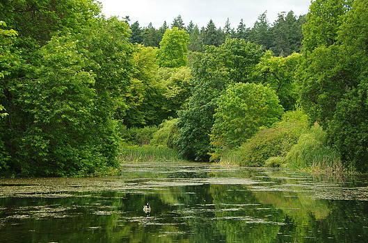 Marilyn Wilson - Summer Pond