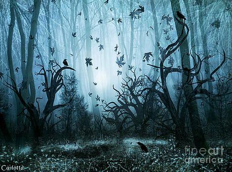 Haunted Forest by Carlotta Ceawlin