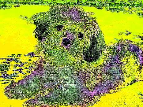 Havanese Dog by Kathy Budd