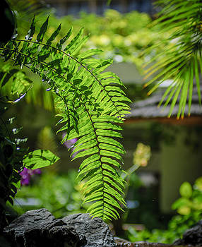 Hawaiian Fern by Tony Gliatta