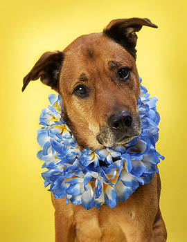 Hawaiian Hound With Lei on Yellow by Rebecca Brittain