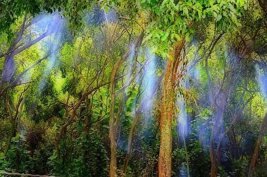 Hawaiian lights by Tina Hannaford