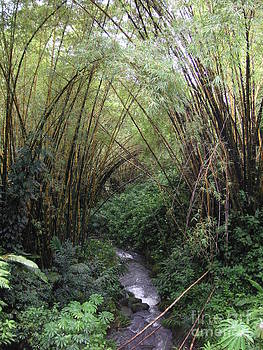 Hawaiian stream by Crystal Miller