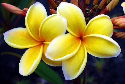 Hawaiian Sun by Emily Fidler