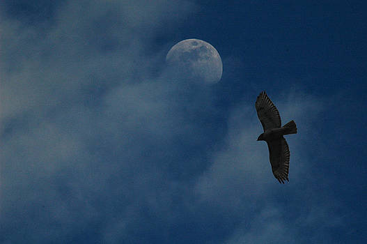 Raymond Salani III - Hawk and Moon Coming Out of the Mist